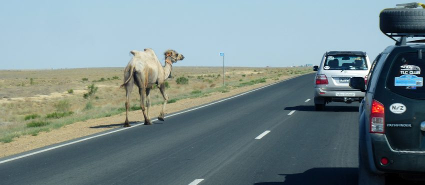 camels on the Silk Road Overland Journeys
